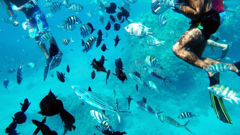 Het snorkelen in het Rode Overzees dichtbij koraalriffen stock afbeelding
