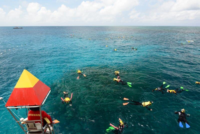 Het snorkelen op het Grote Barri?rerif Haven Douglas queensland australi? stock afbeelding