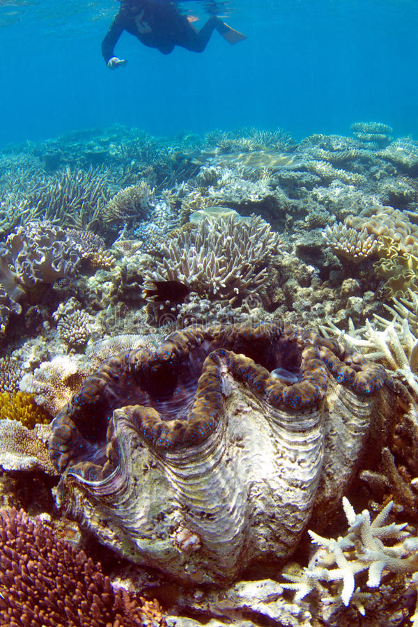 Het snorkelen op koraalrif royalty-vrije stock afbeelding