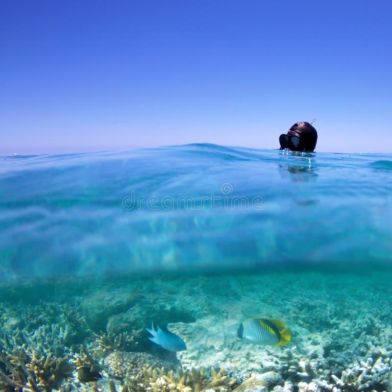 Het snorkelen op koraalrif stock fotografie