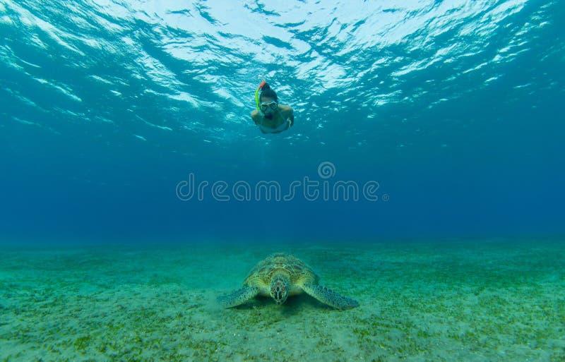 Het snorkelen vrouw met hawksbillschildpad, onderwaterfotografie stock afbeelding