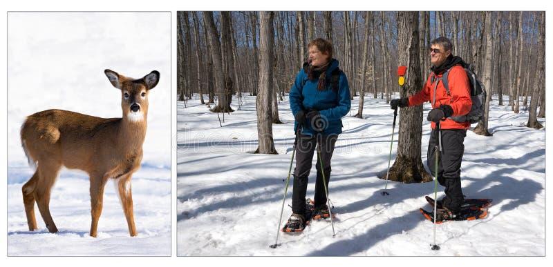 Het snowshoeing van de winter stock foto