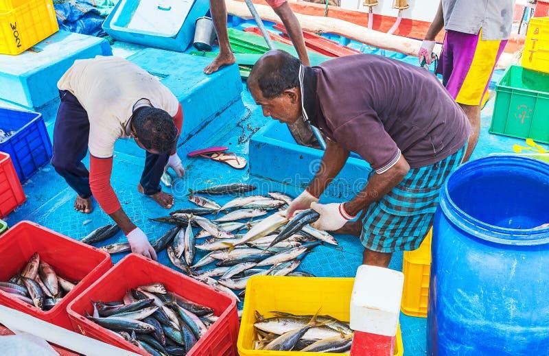 Het sorteren van de vangst stock fotografie