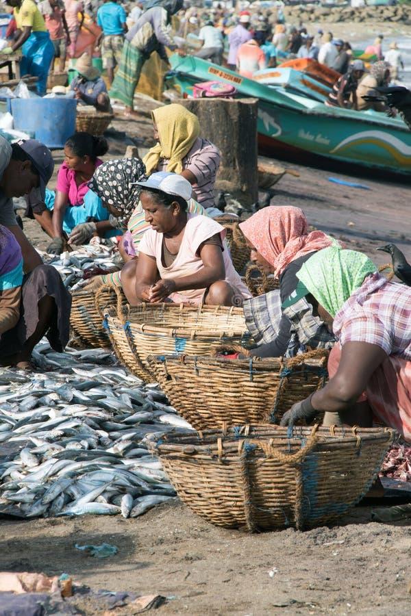 Het sorteren vissen royalty-vrije stock foto