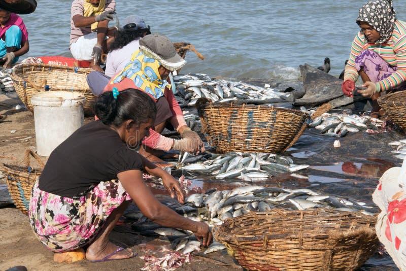 Het sorteren vissen bij de vissenmarkt stock fotografie