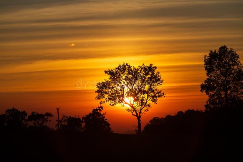 Het spectrum van zonsondergang en silhouetachtergrond op bomen stock afbeelding