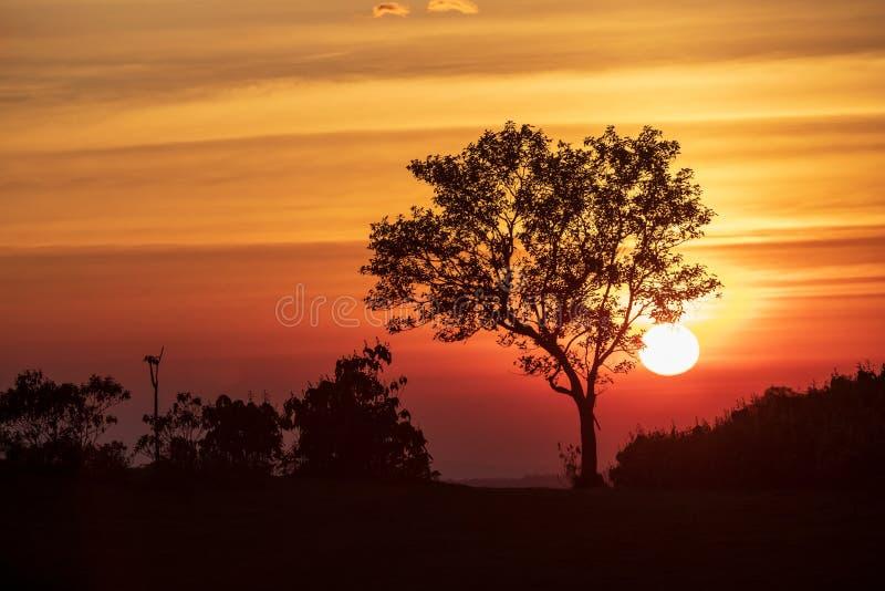 Het spectrum van zonsondergang en silhouetachtergrond op bomen royalty-vrije stock foto