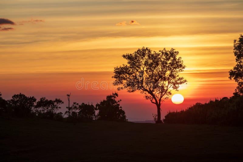 Het spectrum van zonsondergang en silhouetachtergrond op bomen royalty-vrije stock foto's