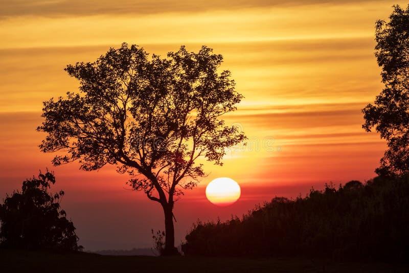 Het spectrum van zonsondergang en silhouetachtergrond op bomen royalty-vrije stock fotografie