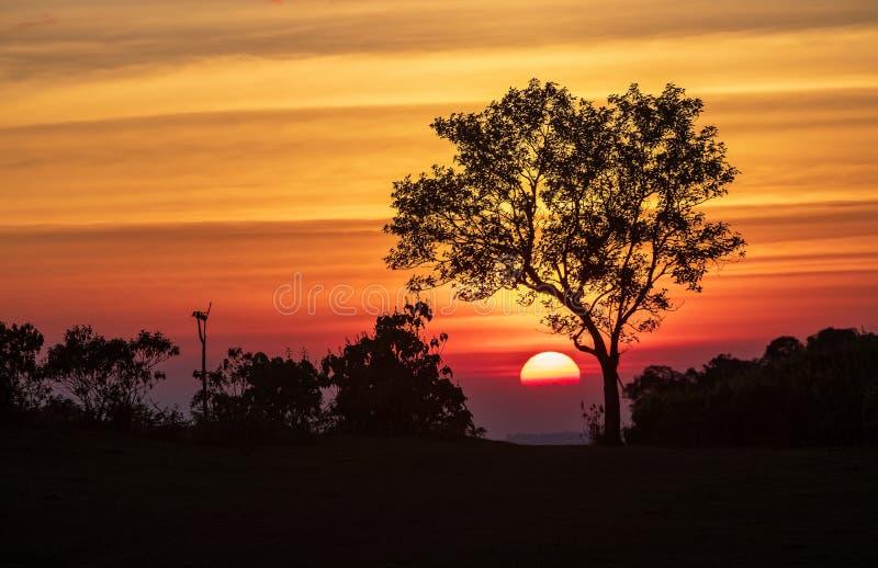Het spectrum van zonsondergang en silhouetachtergrond op bomen stock foto