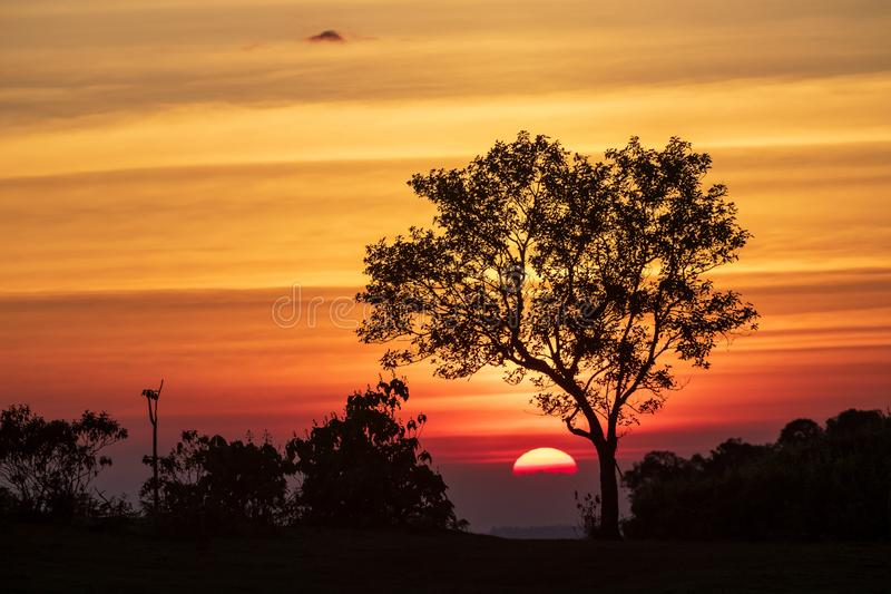 Het spectrum van zonsondergang en silhouetachtergrond op bomen stock foto's