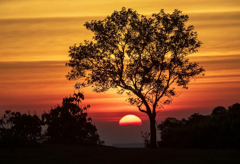 Het spectrum van zonsondergang en silhouetachtergrond op bomen royalty-vrije stock afbeelding