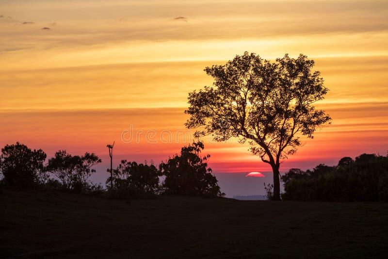 Het spectrum van zonsondergang en silhouetachtergrond op bomen stock afbeeldingen