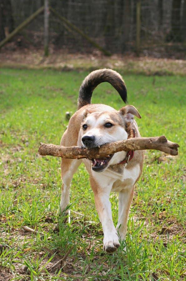 Het spelen de Hond van de Herder stock afbeelding