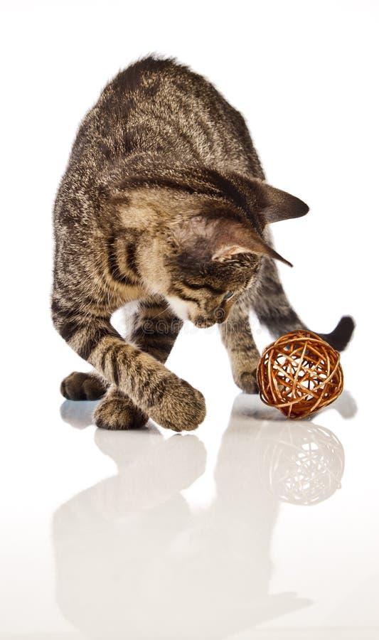 Het spelen kat, Kerstmis royalty-vrije stock afbeeldingen