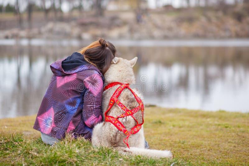 Het spelen met hond Siberische schor stock foto