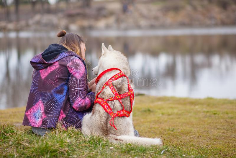 Het spelen met hond Siberische schor royalty-vrije stock afbeeldingen