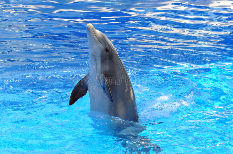 Het Spelen van de dolfijn in het Water stock fotografie