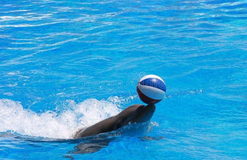 Het spelen van de dolfijn met een bal stock foto's