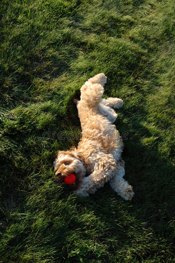 Het spelen van de hond in het gras stock foto's