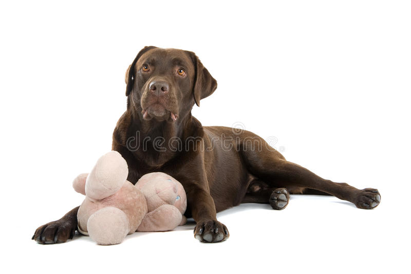 Het spelen van de hond met teddybeer royalty-vrije stock afbeelding
