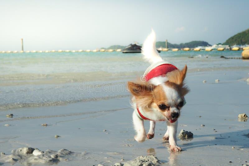 Het spelen van de hond op het strand stock fotografie