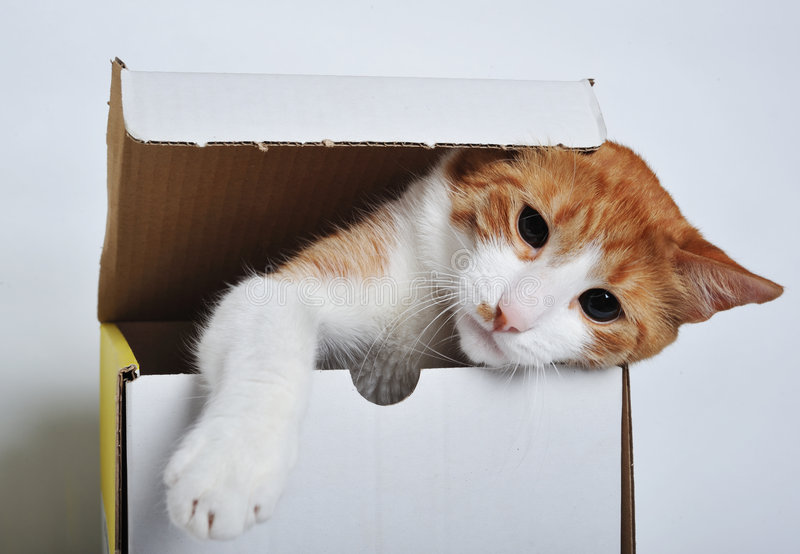Het spelen van de kat royalty-vrije stock afbeeldingen