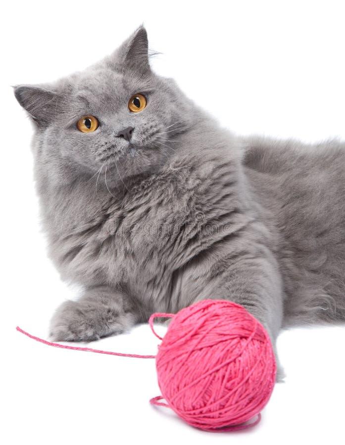 Het spelen van de kat met clew   royalty-vrije stock foto