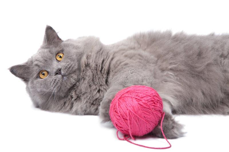 Het spelen van de kat met geïsoleerde clew royalty-vrije stock fotografie