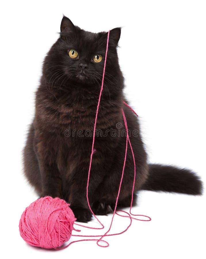Het spelen van de kat met geïsoleerde clew stock foto
