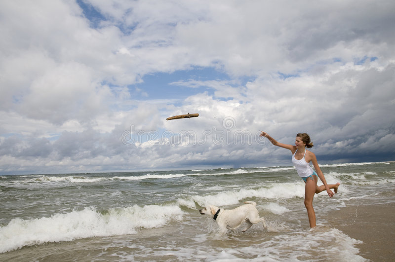 Het spelen van de labrador op het strand. stock foto