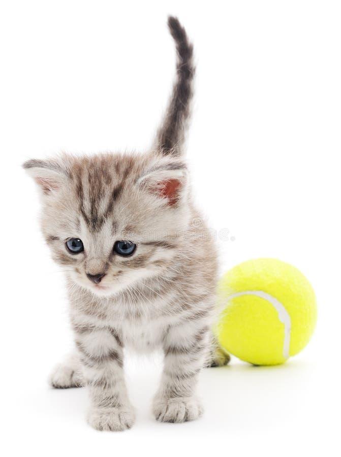 Het spelen van het katje met bal royalty-vrije stock afbeelding