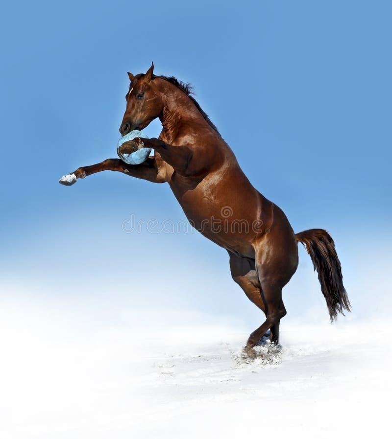 Het spelen van het paard met bal royalty-vrije stock afbeelding