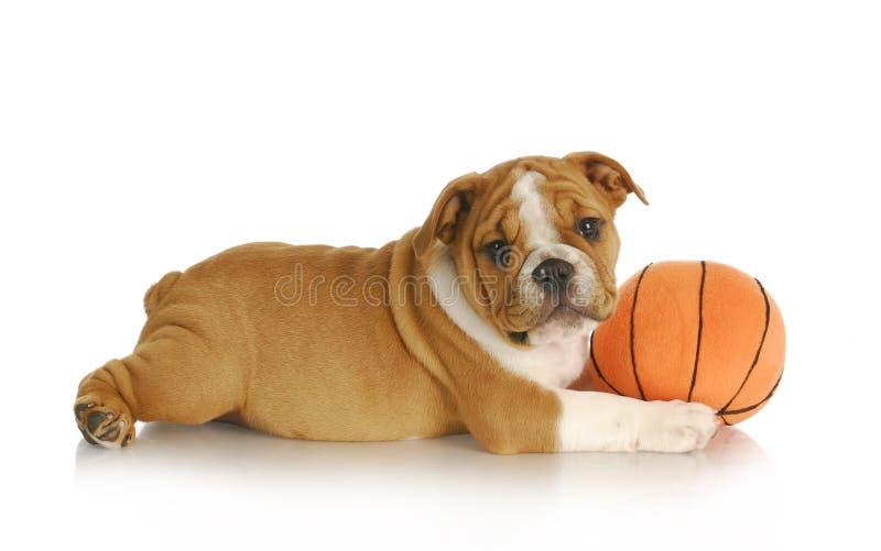 Het spelen van het puppy royalty-vrije stock foto's
