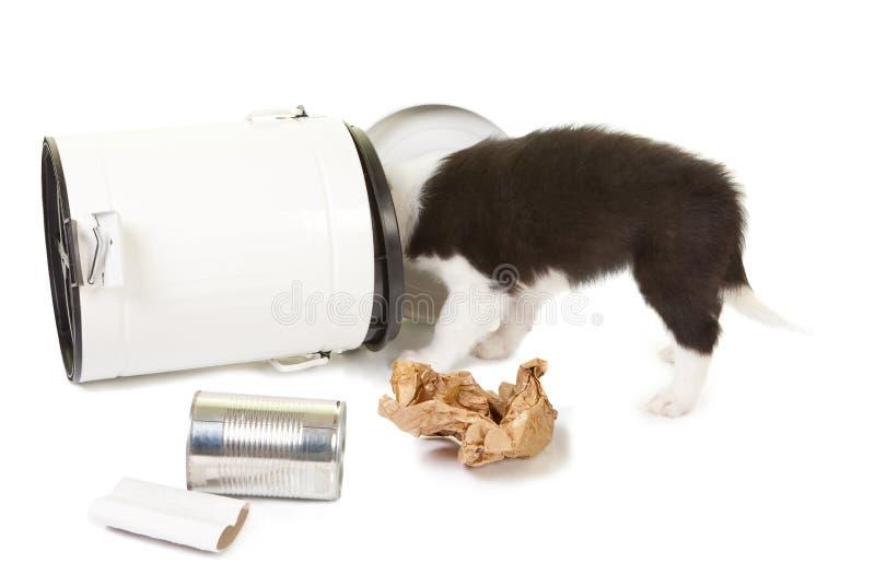Het spelen van het puppy met huisvuil stock fotografie