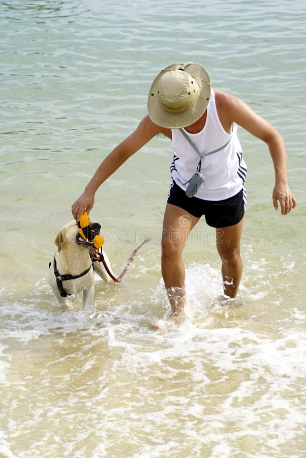 Het spelhaal van de hond en van de eigenaar stock foto