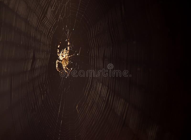 Het spinnen van de spin Web royalty-vrije stock foto's
