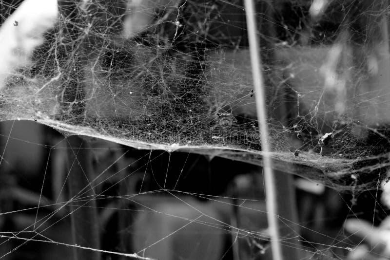 Het spinneweb met zonlicht op de rug is een mooie natuurlijke bokeh stock foto