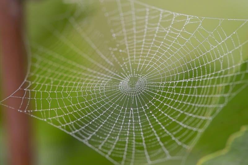 Het spinneweb van de ochtend stock afbeeldingen