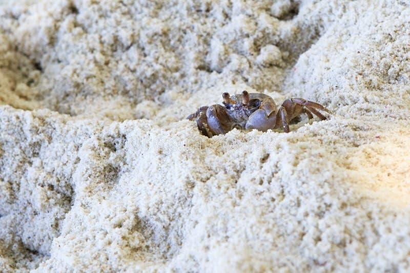 Het Spookkrab van Madagascar op het strand van eiland royalty-vrije stock fotografie