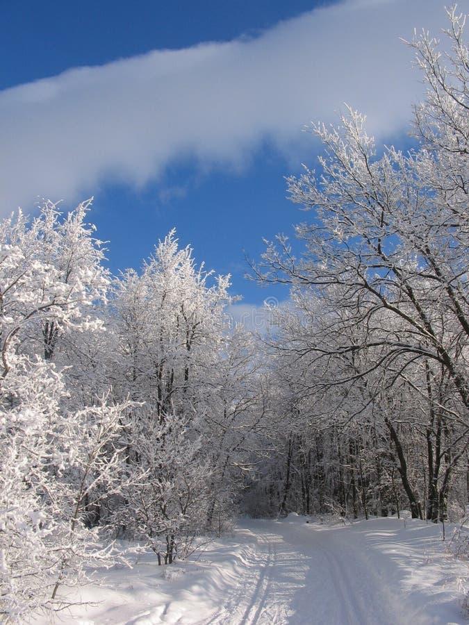 Het spoor van de ski in een bos. royalty-vrije stock afbeelding