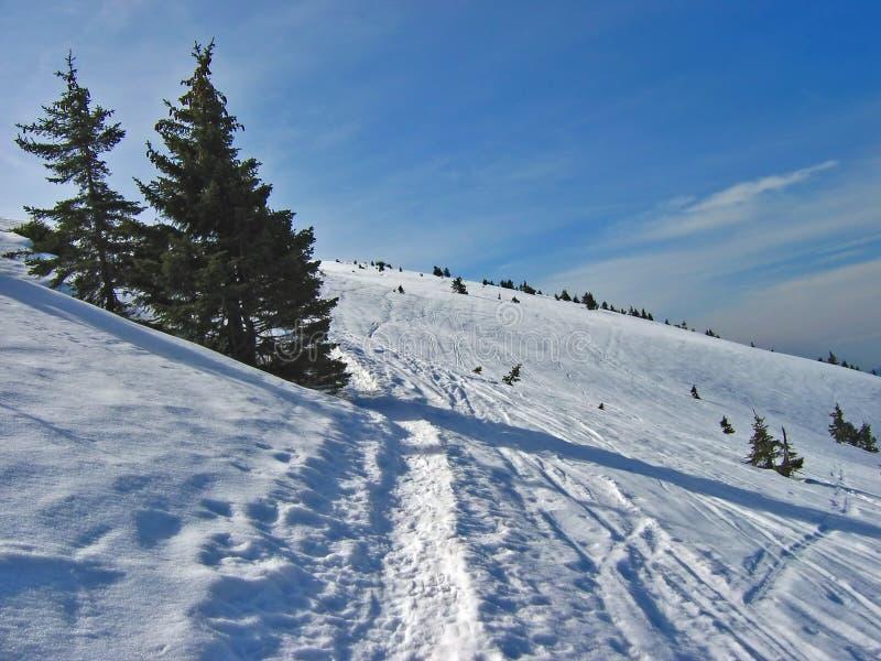 Het spoor van de winter royalty-vrije stock afbeelding