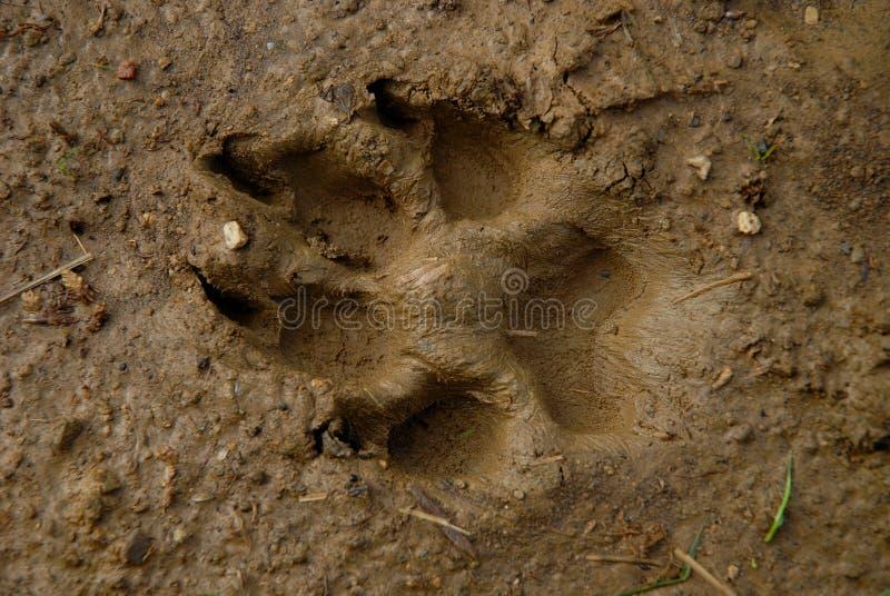 Het spoor van honden op modder royalty-vrije stock foto's