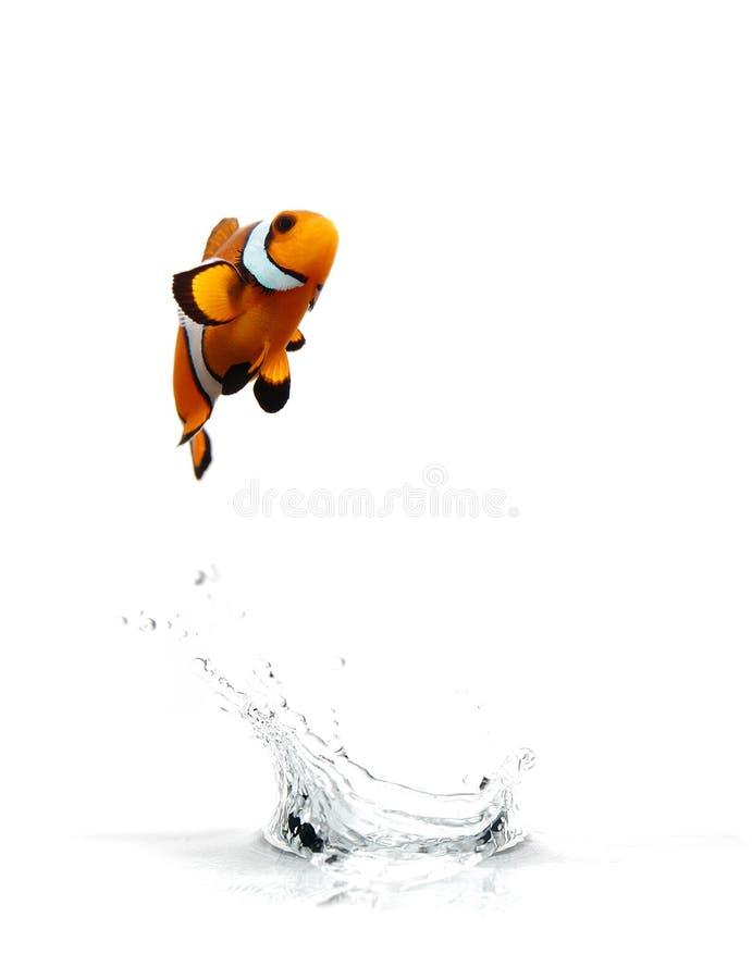 Het springen Clownfish stock foto's