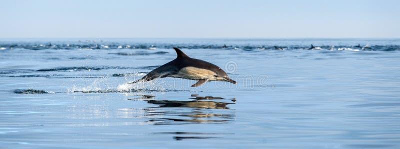 Het springen dolfijn in de oceaan stock foto