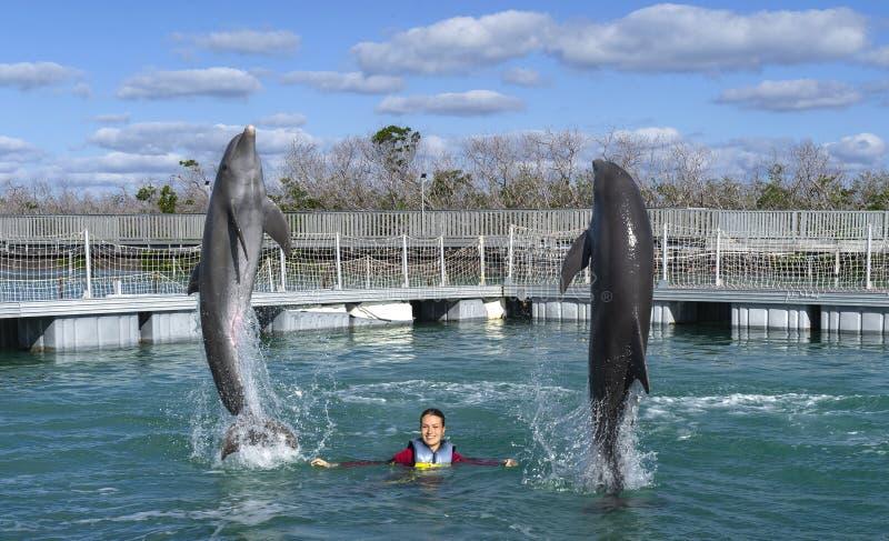 Het springen dolfijnen Vrouw die met dolfijnen in blauw water zwemmen royalty-vrije stock afbeeldingen