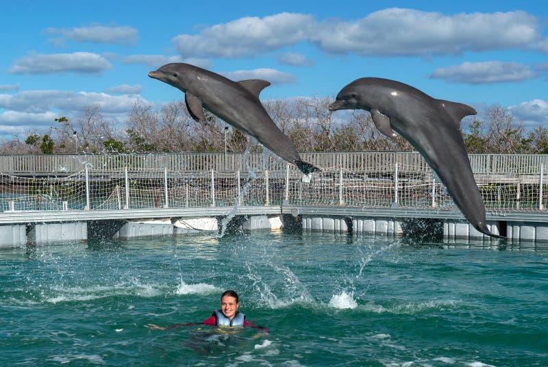Het springen dolfijnen Vrouw die met dolfijnen in blauw water zwemmen royalty-vrije stock foto's