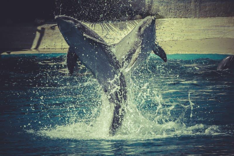 Het springen, dolfijnsprong uit het water in overzees royalty-vrije stock afbeelding