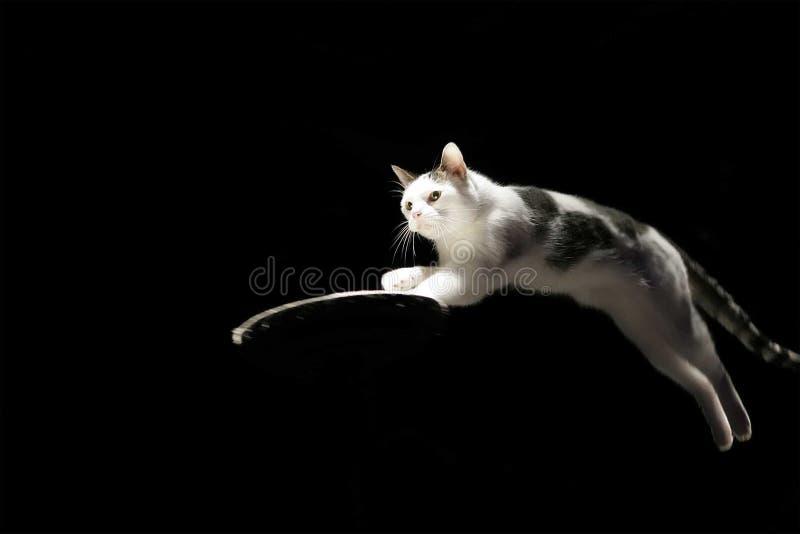 Het springen Kat stock afbeeldingen