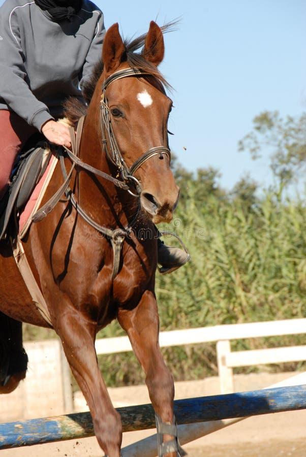 Het springen paard stock fotografie